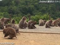 嵐山モンキーパークKYOUTO