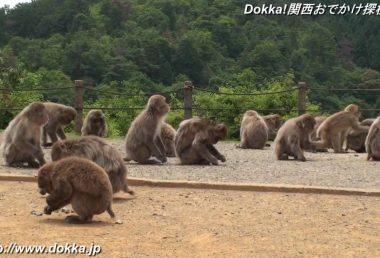 嵐山モンキーパークKyoto