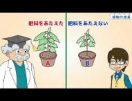 小5理科 植物の成長