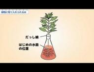 小6理科 植物に取り入れられる水