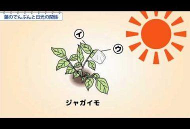 小6理科 葉のでんぷんと日光の関係