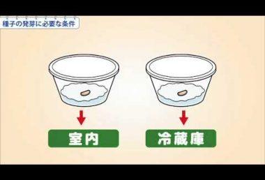 小5理科 種子の発芽に必要な条件