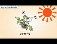【H&W制作】小6理科 葉のでんぷんと日光の関係