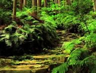 【ここに美しき日本がある】世界遺産 吉野高野熊野の国 熊野古道