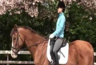 家族みんなで楽しめるスポーツ????「はじめよう!乗馬」