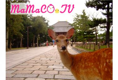 奈良の鹿の「日給」!?